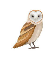 Barn owl with white face and brown wings side vector