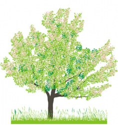 cherry tree in spring vector image