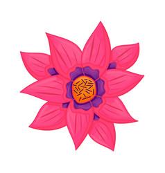 Floral botanical flower color ornament pink vector