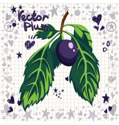 fresh plum with leaves vector image