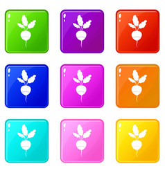 Fresh radish icons 9 set vector
