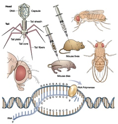 Genetics vector image