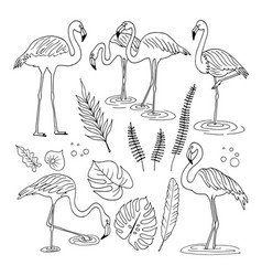 Set of flamingo images vector