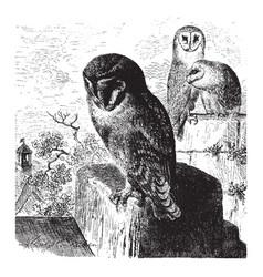 Barn owls vintage vector