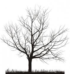 cherry tree in winter vector image vector image