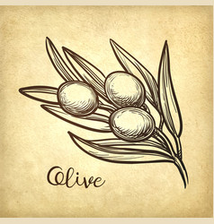 Hand drawn of olive branch vector
