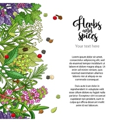 herbal card design with spices and herbs vector image vector image