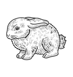 little rabbit sketch vector image