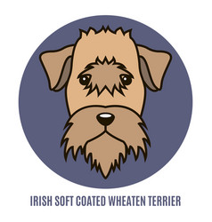 Portrait of irish soft coated wheaten terrier vector