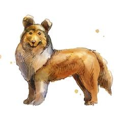 Shetland Sheepdog vector