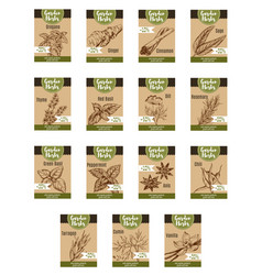Spice and garden herb discount tag and label vector