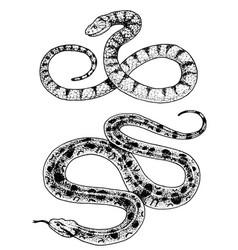 viper snake serpent cobra and python anaconda vector image