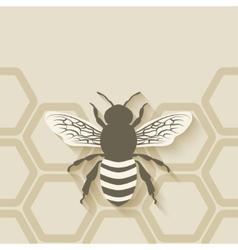bee honeycomb background vector image