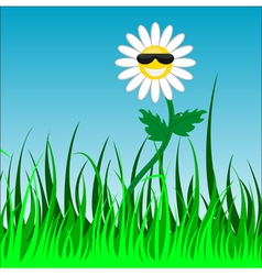 funky camomile vector image
