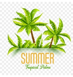 Summer coconut palms vector image vector image