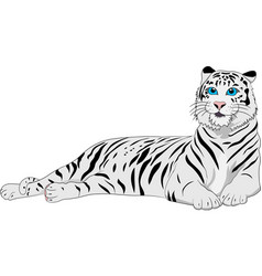 cute white tiger on the white background vector image