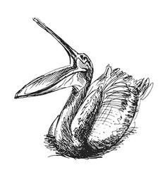 Hand sketch pelican vector image