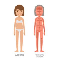 woman nervous system colorful biological poster vector image
