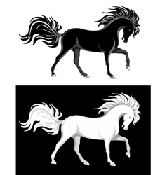 black and white horses vector image
