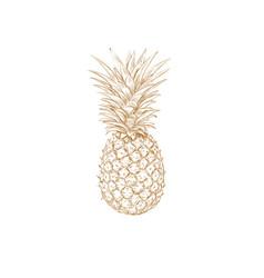 pineapple sketch pineapple vector image