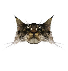 cat in low poly style vector image