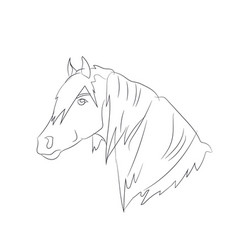 horse portrait lines vector image