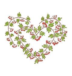 Rowan-berry in heart shape branches vector
