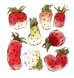 Strawberries Set vector image