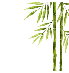 Watercolor bamboo stem with green leaves and copy vector