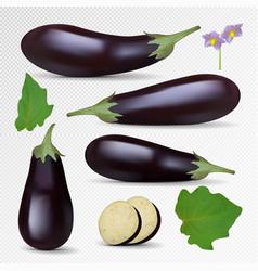 fresh eggplant isolated on white background vector image vector image