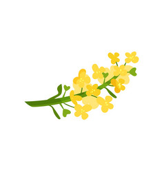 Cartoon of small yellow flowers on vector