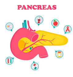 Educational medical poster with pancreas organ vector