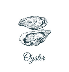 oyster sketch vector image
