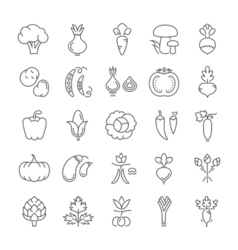 Vegetables Line Icons 6 3 vector