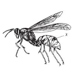 Wasp vintage vector