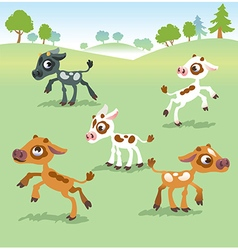 Set of calf cow vector image vector image