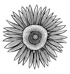 doodle sunflower contour vector image vector image