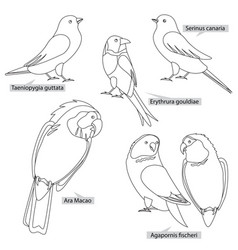 Birds from tropical countries using for living vector