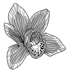 Exotic orchid drawing vector image
