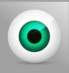 eye green realistic 3d eyeball irispupil icon vector image