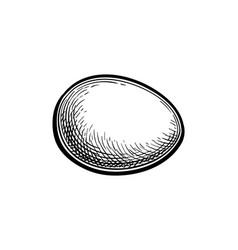 Ink sketch egg vector