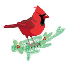 northern cardinal vector image