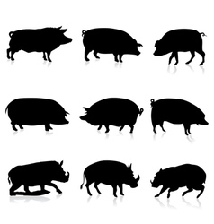 Farm Pigs and Wild Boars Silhouette vector image vector image