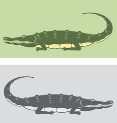 Premium Crocodile vector image vector image