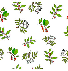 hand drawn berries plants seamless pattern vector image