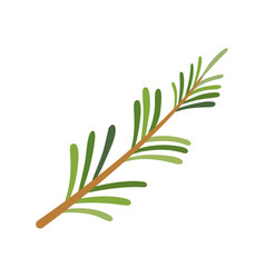 Rosemary icon herbs and spices vector
