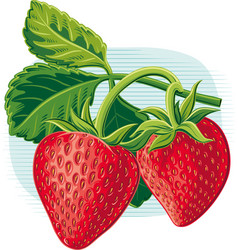 Sprig with leaves and ripe strawberries vector