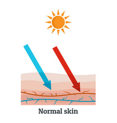 Sunllight normal skin icon flat style vector