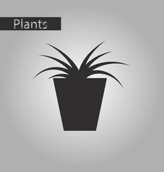 Black and white style icon flower in pot aloe vector