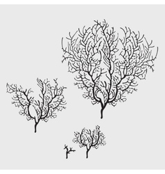 Branches of black coral stylish isolated image vector image vector image
